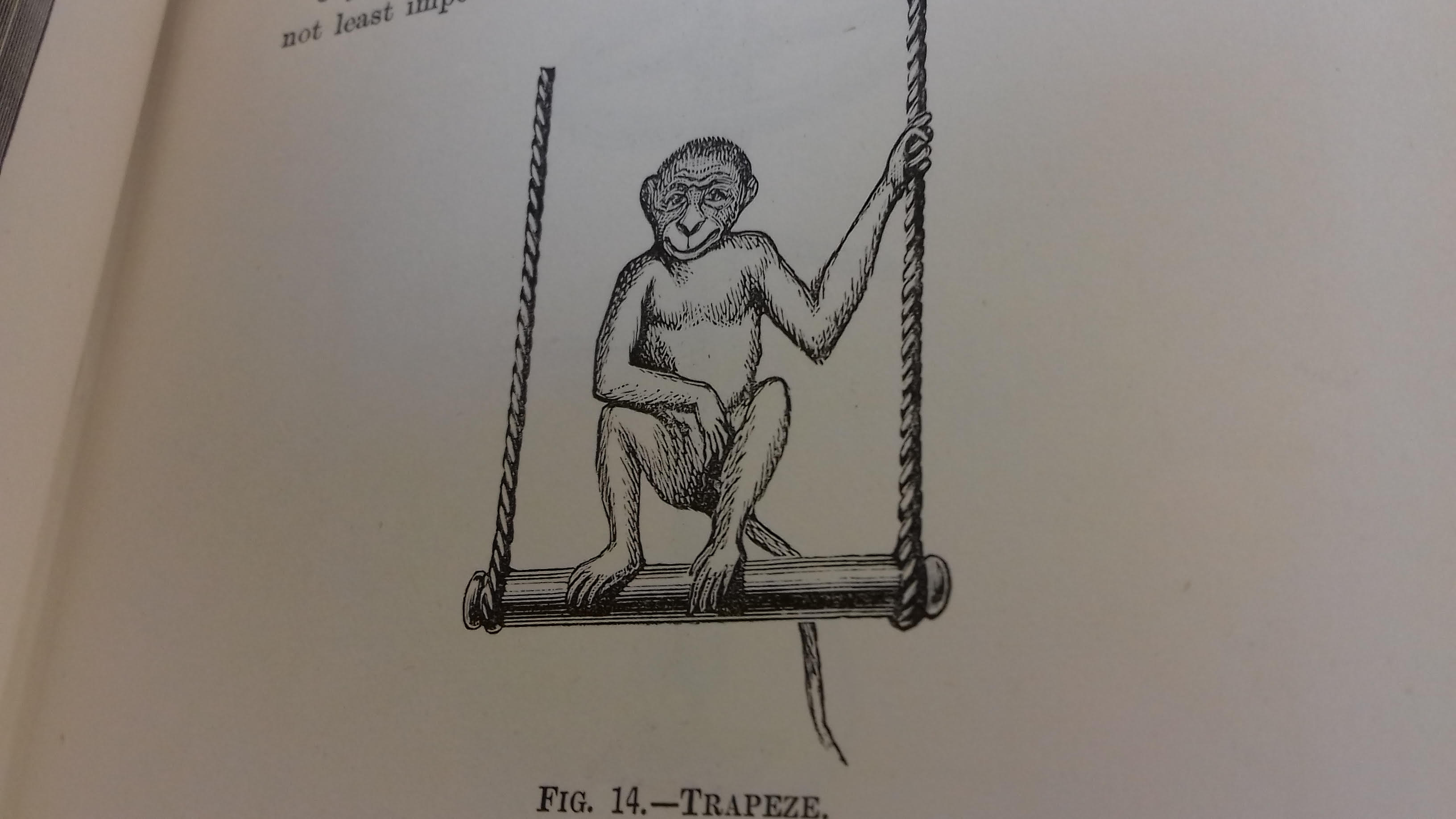 drawing of a monkey on a trapeze