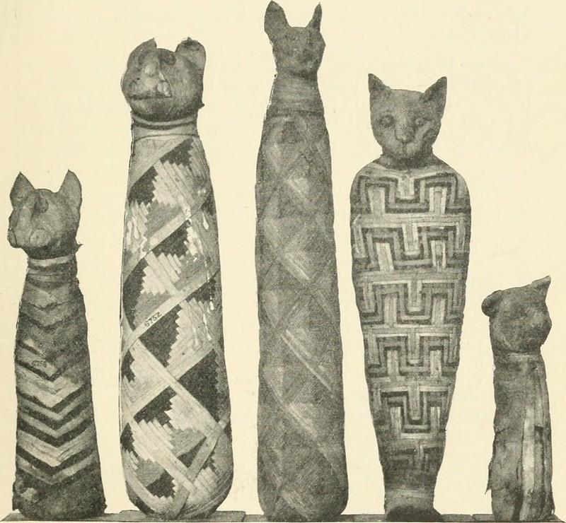 Photo of Egyptian cat mummies